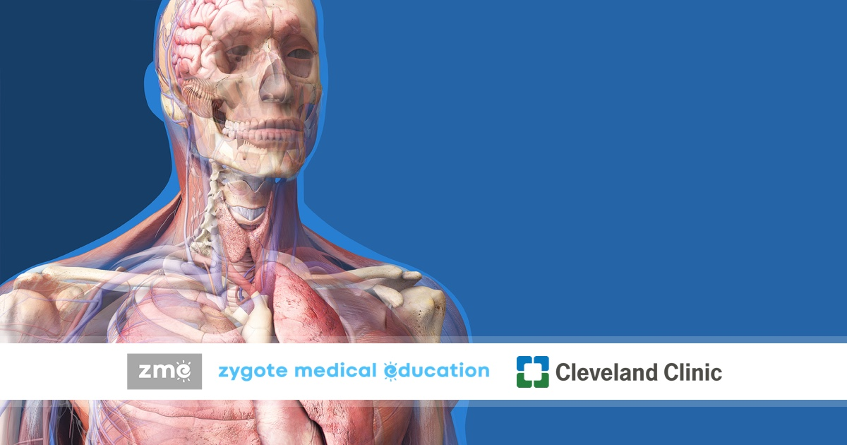 Zygote Medical Education | Learn Applied Anatomy